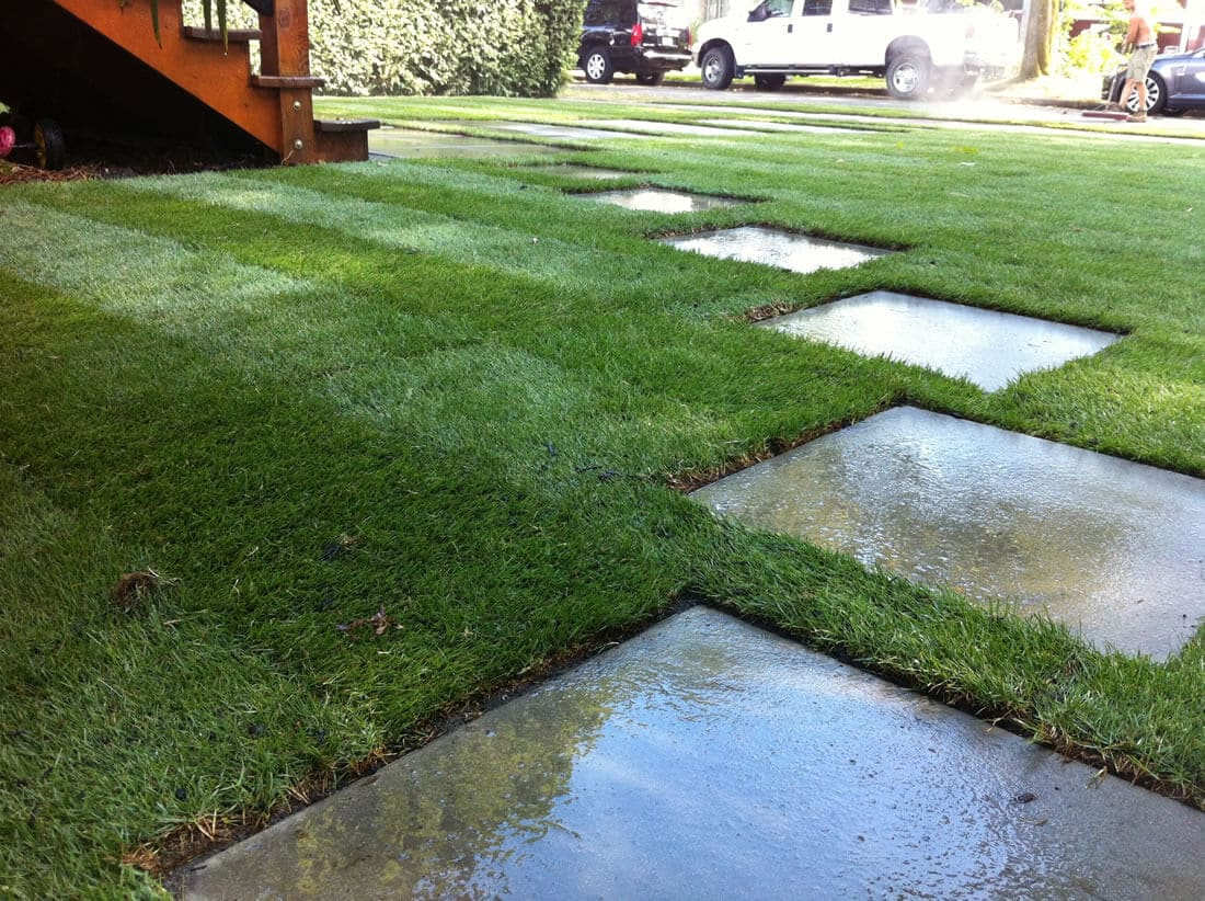 residential landscaping - lawn care detail